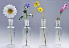 Colpo dello studio dei quattro fiori della sorgente Fotografie Stock