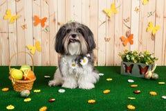 Colpo dello studio di un cane sveglio nella scena vibrante di Pasqua della primavera Immagine Stock Libera da Diritti