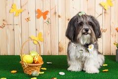 Colpo dello studio di un cane sveglio nella scena vibrante di Pasqua della primavera Fotografie Stock Libere da Diritti