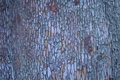 Colpo di macro della corteccia di albero di Madrone (arbutus menziesii) Fotografia Stock