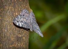 Colpo di macro della farfalla Immagine Stock Libera da Diritti