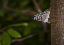 Colpo di macro della farfalla Fotografia Stock Libera da Diritti