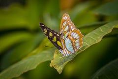 Colpo di macro della farfalla Immagini Stock Libere da Diritti