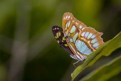 Colpo di macro della farfalla Immagini Stock