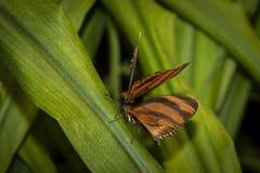 Colpo di macro della farfalla Fotografia Stock