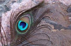 Colpo di macro della piuma del pavone Fotografia Stock