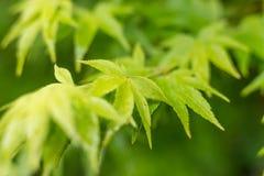 Colpo di macro delle foglie verdi Foresta Fotografia Stock