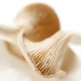 Colpo di macro di due funghi Fotografie Stock Libere da Diritti