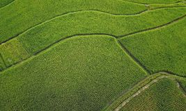 Colpo di vista aerea con il fuco del paesaggio rurale di Ubud dell'asiatico delle risaie organiche verdi nell'isola di Bali in In Fotografie Stock Libere da Diritti