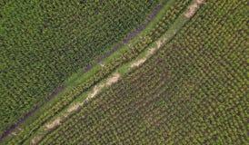 Colpo di vista aerea con il fuco del paesaggio rurale di Ubud dell'asiatico delle risaie organiche verdi nell'isola di Bali in In Immagini Stock