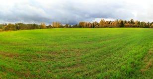 Colpo distante del fondo verde del campo dei raccolti di cereali vernini Fotografia Stock