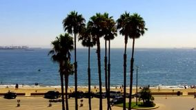 Colpo emblematico di California del sud che caratterizza le palme che ondeggiano nel mare video d archivio