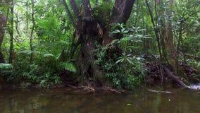 Colpo idilliaco di un tronco di albero stock footage