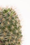 Colpo a macroistruzione del cactus Fotografia Stock