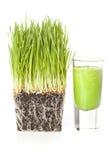 Colpo organico verde dell'erba del grano fotografia stock