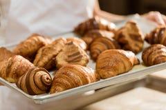 colpo potato del vassoio della tenuta del panettiere con i croissant freschi immagini stock