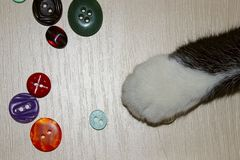 Colpo potato di Cat Playing Colorful Buttons zampa del ` s del gatto fotografia stock libera da diritti