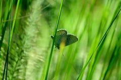 Colpo potato di erba verde con la farfalla immagine stock