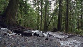 Colpo precipitante del carrello della corrente della foresta pluviale di nord-ovest pacifica stock footage