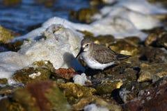 Colpo realmente adorabile di un uccello acquatico fotografia stock