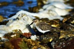 Colpo realmente adorabile di un uccello acquatico immagini stock