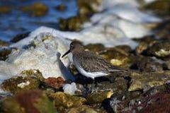 Colpo realmente adorabile di un uccello acquatico immagini stock libere da diritti