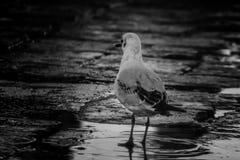 Colpo realmente adorabile di un uccello acquatico immagine stock