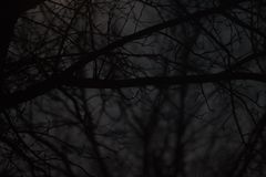 Colpo scuro attraverso gli alberi terrificanti immagine stock