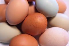 Colpo vicino delle uova variopinte dell'azienda agricola Fotografia Stock Libera da Diritti