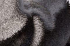 Colpo vicino di un cappotto americano del ` s di Akita fotografia stock