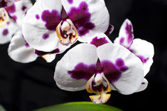 Colrful orchids  on black background Stock Images