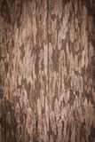 Colse up of old wooden door. Old wood grunge background stock photography