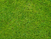 Colseup Beautiful Green Grass Pattern From Golf Course Royalty Free Stock Photos
