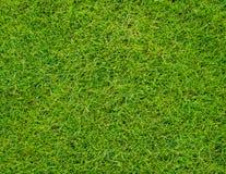 Colseup zielonej trawy Piękny wzór od pola golfowego zdjęcia royalty free