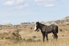 Colt in canyons looking for mother Royalty Free Stock Photo