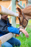 Colt and farmer. Beautiful six week old colt with a farmer by the fence royalty free stock image