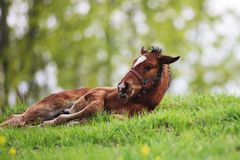 Colt on grass Royalty Free Stock Photos