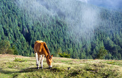 Colt horse grazing on mountain Stock Images