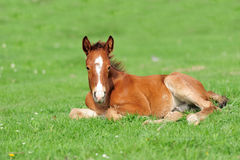 Colt. On a meadow in summer day stock photo