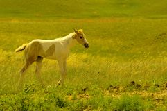 Colt. A young colt on a spring day royalty free stock photo
