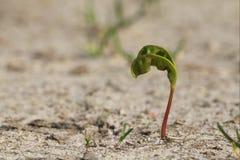 coltiva la pianta Fotografie Stock Libere da Diritti