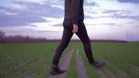 Coltivando, il maschio dell'agronomo supera il campo verde e considera la cultura germogliata del grano archivi video