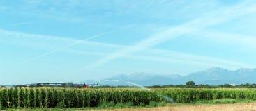 Coltivando in pianura orientale della Corsica Immagine Stock Libera da Diritti