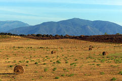 Coltivando in pianura orientale della Corsica Fotografie Stock Libere da Diritti
