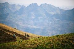 Coltivando sulla montagna Fotografia Stock