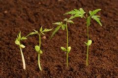 Coltivare-Nuova vita delle piante fotografia stock libera da diritti