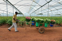 Coltivatore africano Immagine Stock Libera da Diritti