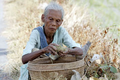 Coltivatore anziano Immagine Stock Libera da Diritti