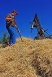 Coltivatore che alimenta una gottazza dei 1918 fieni Fotografie Stock