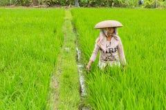 Coltivatore che lavora al giacimento del riso Fotografia Stock